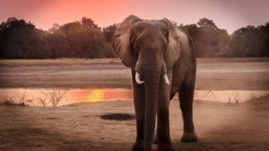 סיפור זן הפיל והפרעוש